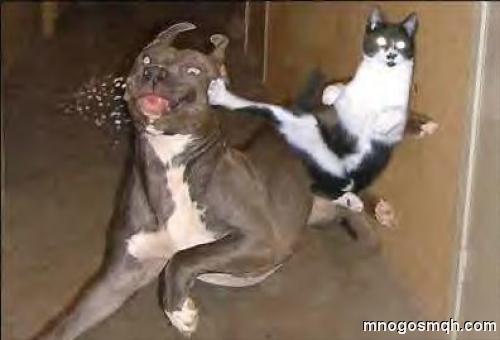 куче и котка смях