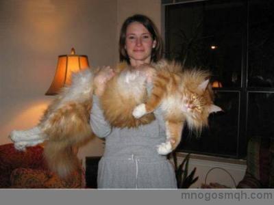 големичка котка