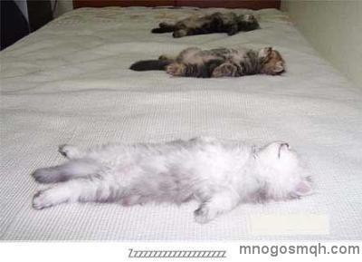 малки котенца спят