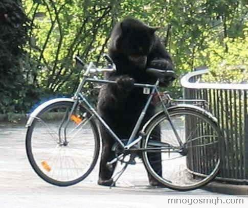 мечка и колело