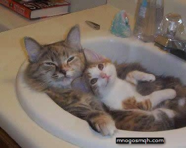 готини котки смях